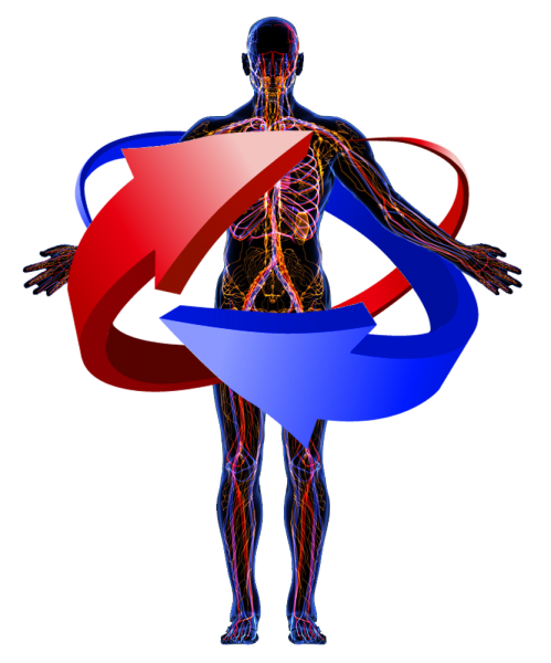 Force Flow Of Blood: WHERE HEALTHY STARTS FROM THE INSIDE